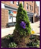 Paint Plainville Purple - Photo # (87)