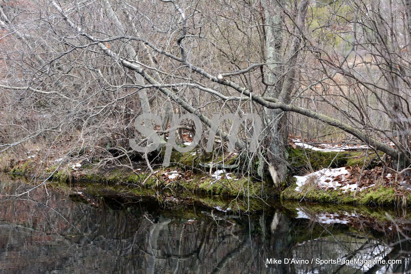Scoville Resevoir Nature Walkway (43)