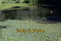 Gallery Non-Sports Summer Photos of Mill Pond Way - Wolcott, CT. # (11)