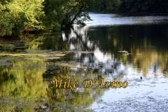 Gallery Non-Sports Summer Photos of Mill Pond Way - Wolcott, CT. # (29)