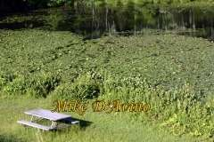 Gallery Non-Sports Summer Photos of Mill Pond Way - Wolcott, CT. # (7)