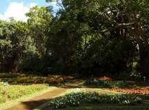 Gallery Non-Sports; the Azores, Gardens of Antonio Borge and the Palace of Sant' Ana (99)