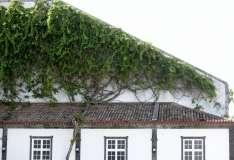 Gallery Non-Sports the Azores, Ponta Delgado, Part 1, (84)
