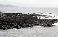 Gallery Non-Sports, the Azores, Ponte Delgado, Part 2, (94)