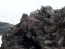 Termas da Ferraria and Volcanic Cliffs (45)