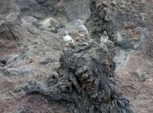 Termas da Ferraria and Volcanic Cliffs (46)