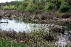 Tomasso Nature Park in May 059