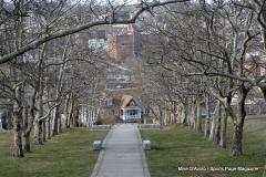 Walnut Hill Park 078