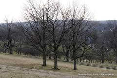 Walnut Hill Park 103