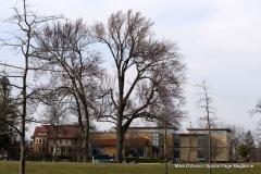 Walnut Hill Park 133