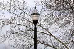 Walnut Hill Park 157