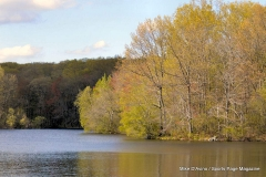 Gallery Non-Sports; Mill Pond Way - May Weekend Walk Photo # (71)