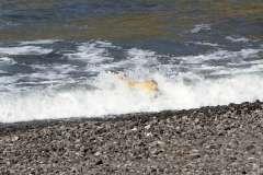 The Azores, Sao Miguel Island, Nordeste Full-Day Safari Tour - Photo # (38)